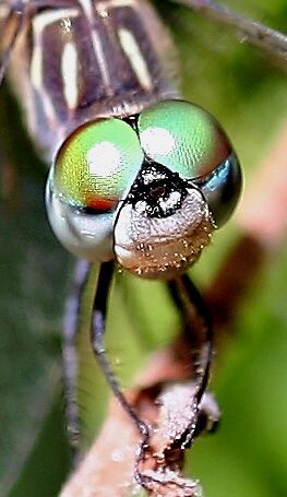 Dragonfly or alien? by Larry