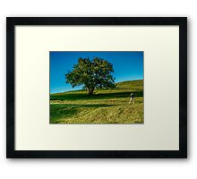 Afternoon Stroll Framed Print