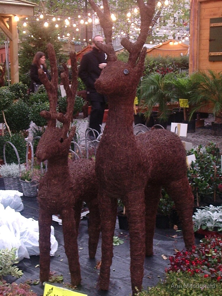 xmas reindeer display by Ann Macdonald