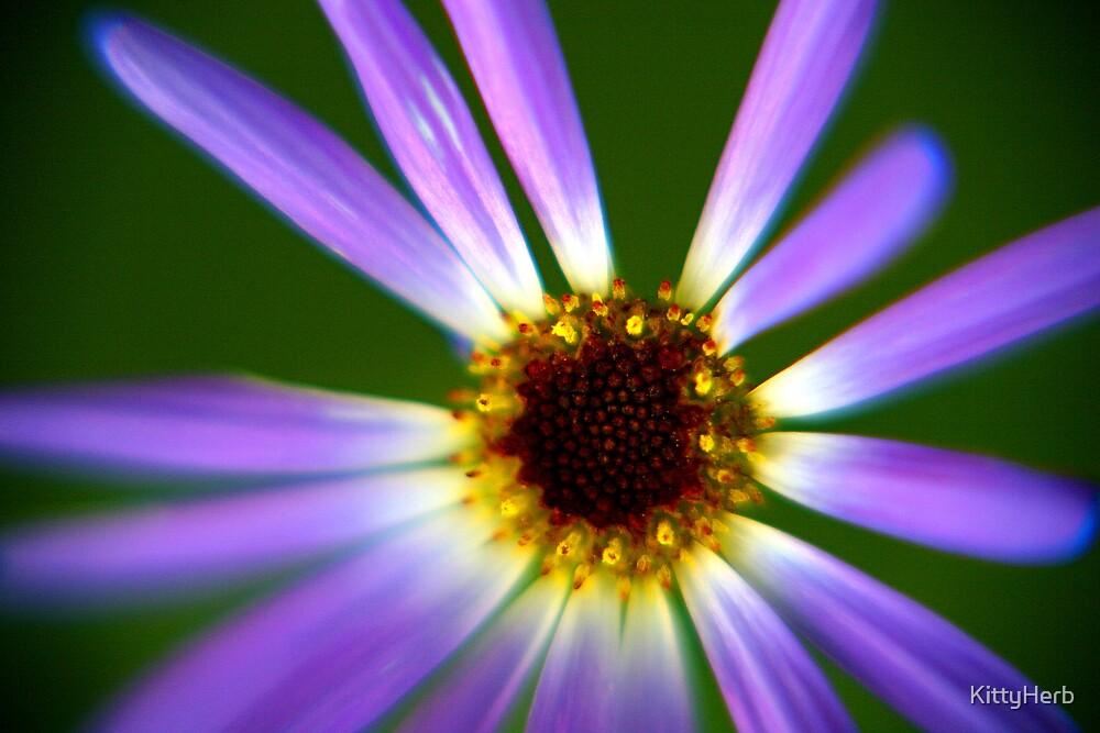 purple flower by KittyHerb