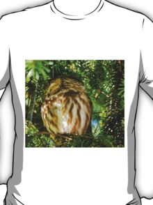 Sleepy Saw-whet Owl on a Sunny Afternoon T-Shirt
