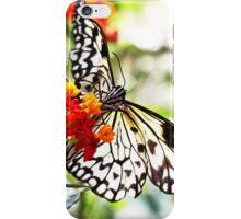 05 - Spring Time  iPhone Case/Skin