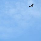 Vulture by Barbara Kaplowitz