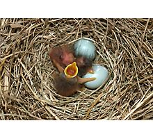 Baby Blue Birds 2 Photographic Print