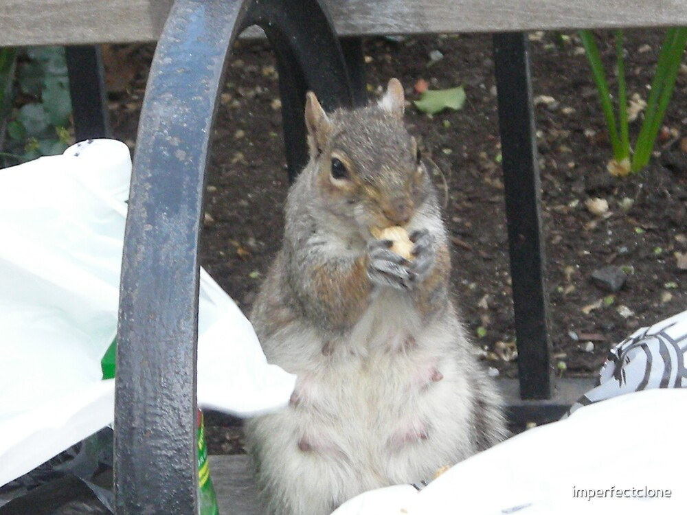 Hungry Squirrel by imperfectclone