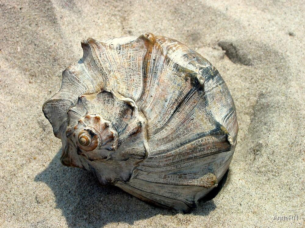Seashell by AnneRN