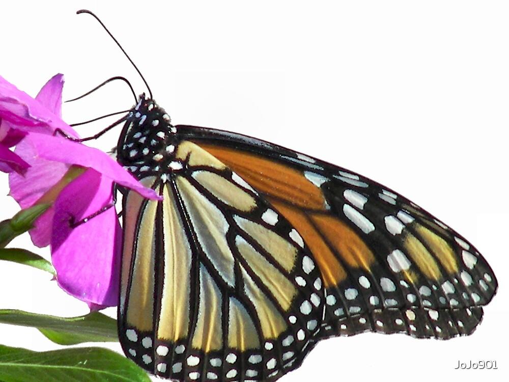 Papillon by JoJo901