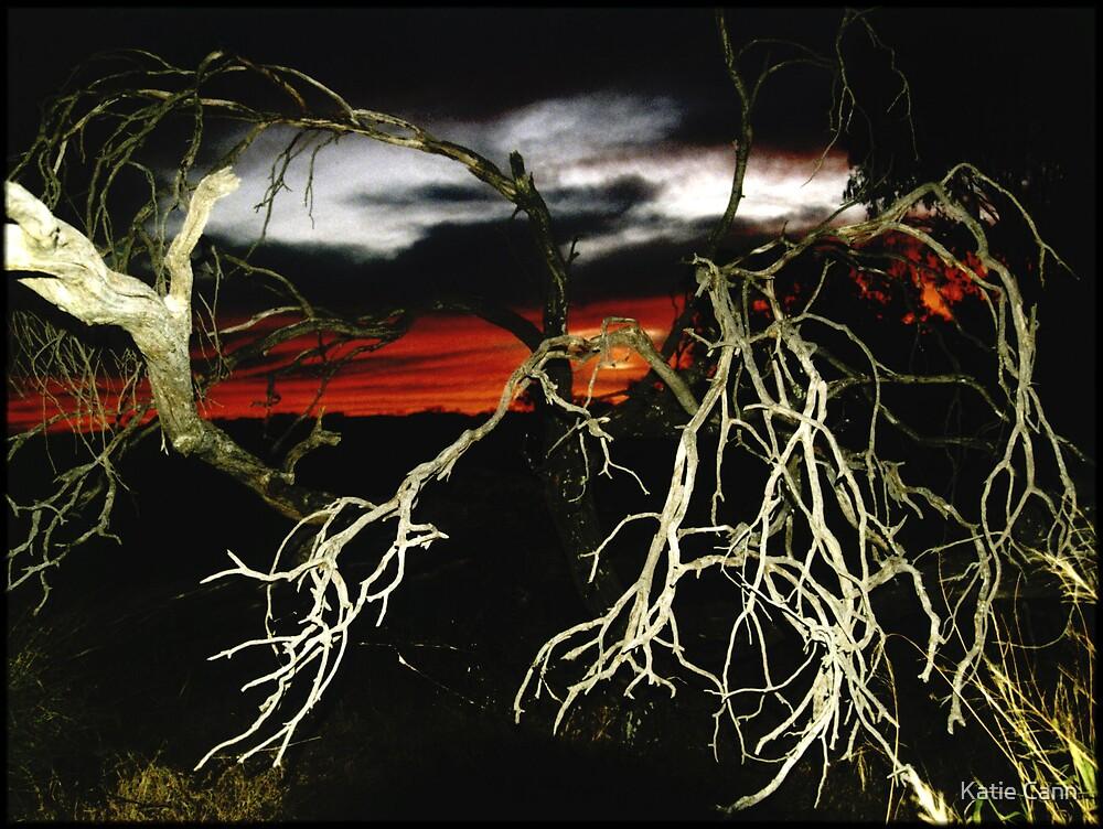 Dead Wood by Katie Cann