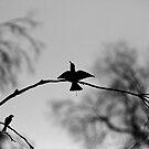 Spread Your Wings by Noel Elliot