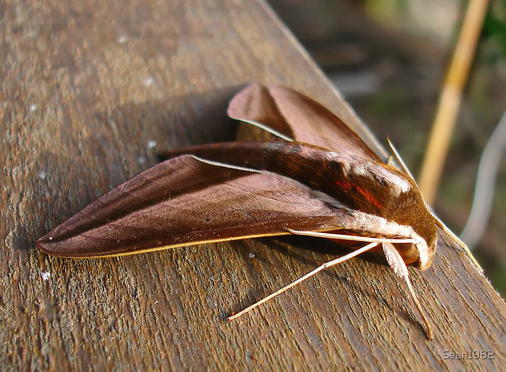 Stealth Moth by Sean1982