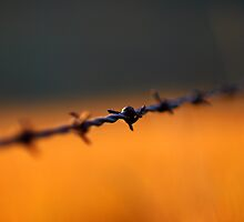 Barbed Wire by Steven  Lippis