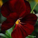 Flower by Gabriel Martinez