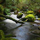 Water Log by Lindsay Knowles