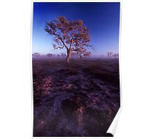 morning light - outback NSW. Poster