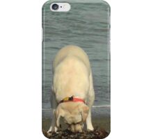 Puppy at the beach iPhone Case/Skin