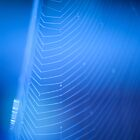 blue web by Ian Robertson