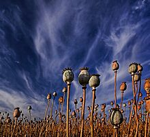 Acendancy by Peter Daalder