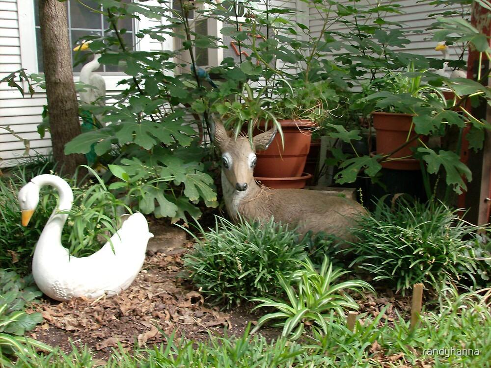 Resting Deer by randyhanna