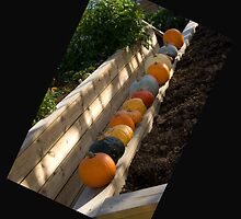 A new angle on pumpkins by John Thurgood