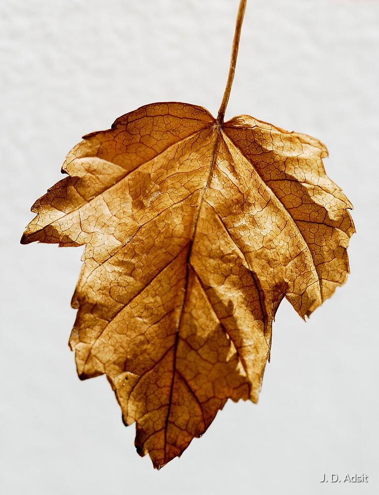 Leafy Texture by J. D. Adsit
