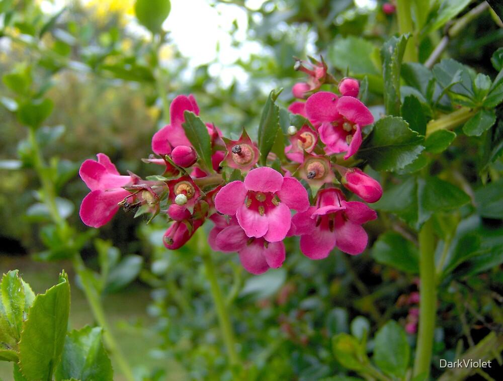 Pink flowers by DarkViolet