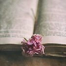 Rose and book by Jill Ferry