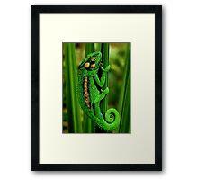 Cape Dwarf Chameleon II Framed Print