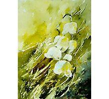 watercolor 020604 Photographic Print