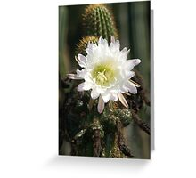 White Cactus Bloom Greeting Card