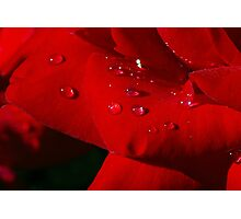 Red petals with a sparkle. Photographic Print