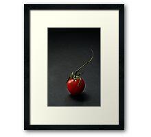 Cherry tomato over dark background Framed Print