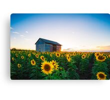 Bathing in the Sun Canvas Print