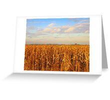 Golden Corn  ... Greeting Card