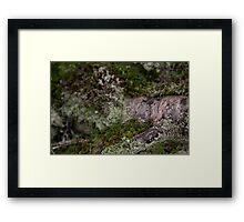 Wetdryvac Photography - Lichen Garden Framed Print