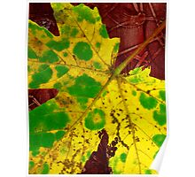 yellow leaf Poster