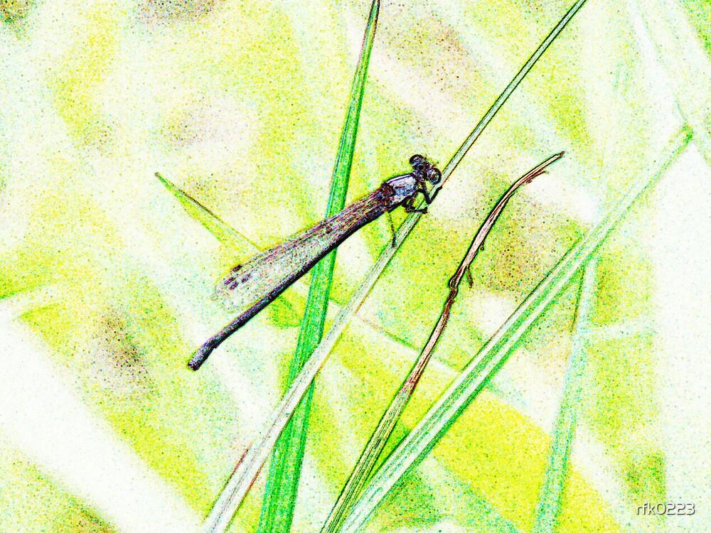 dragonfly by rfk0223