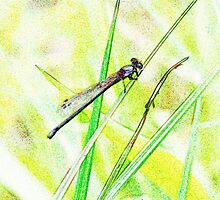 dragonfly by rfk0223