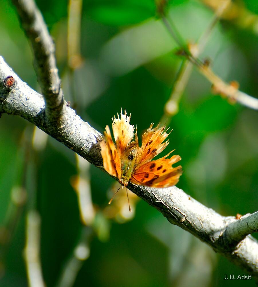 Butterflew by J. D. Adsit
