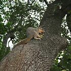 Squirrel by crystalwizard