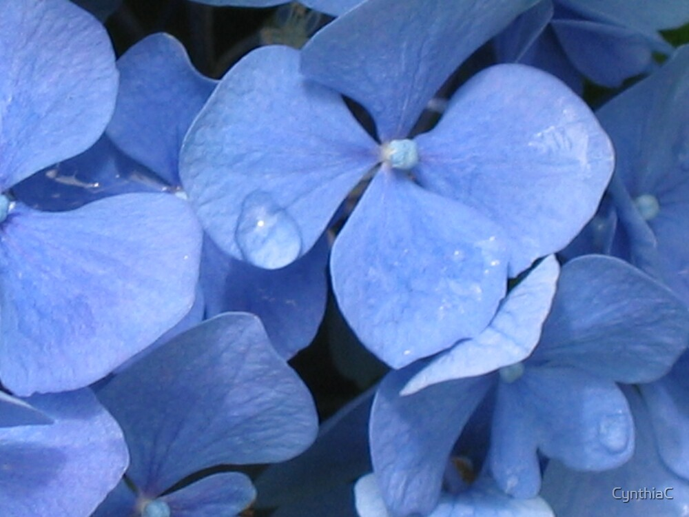 Blue flowers by CynthiaC