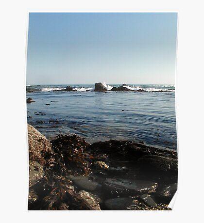 Seaweed&Rocks Poster