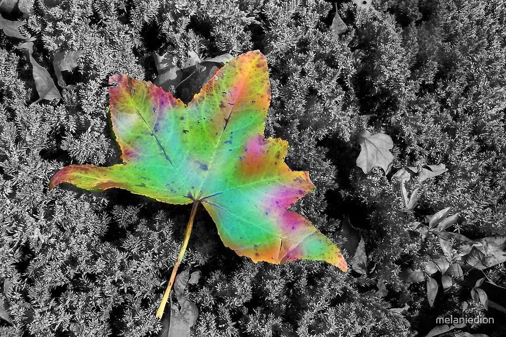 Tye-Dye Maple Leaf by melaniedion
