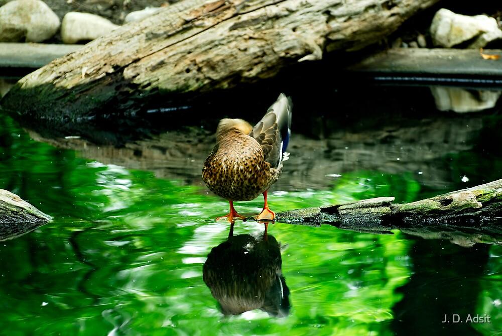 Ducking by J. D. Adsit