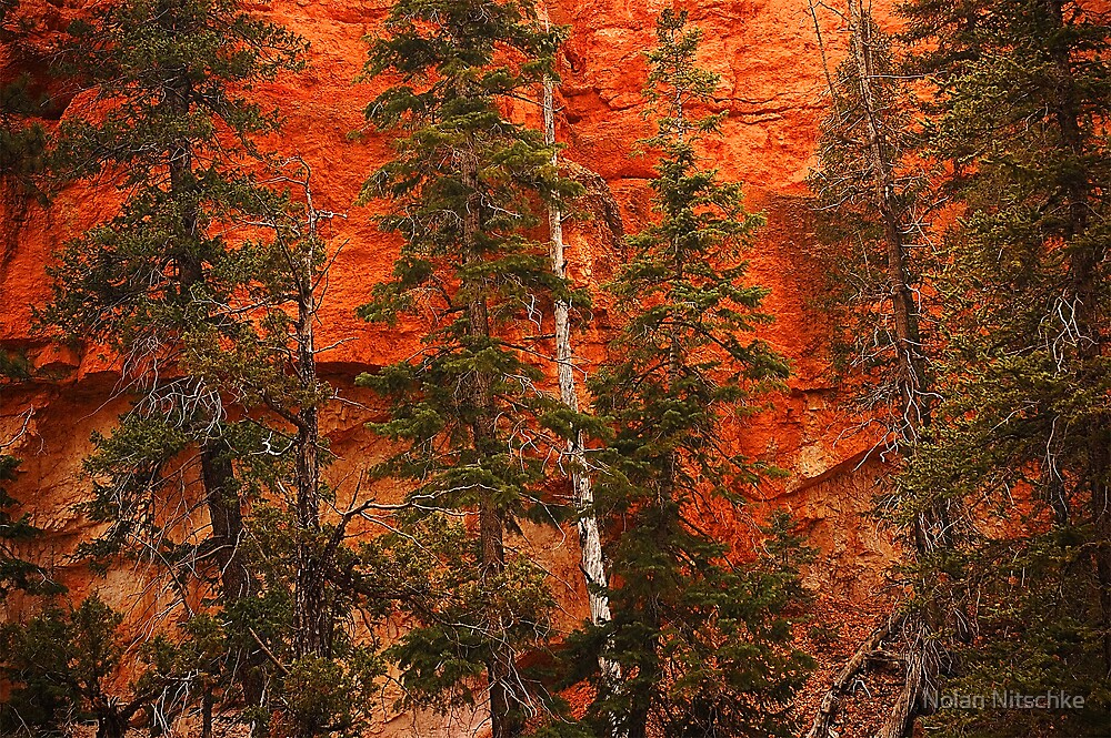 Bryce Canyon Wall by Nolan Nitschke