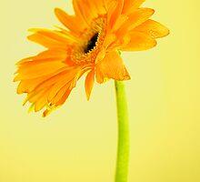 Sunny Side Up by Amandalynn Jones