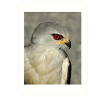 Black Shouldered Kite Art Print