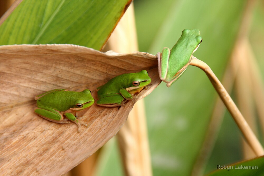 Ready to leap or Green, green, green by Robyn Lakeman