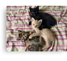 Three little kittens... Canvas Print