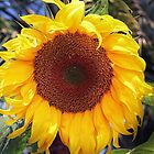 Sunny Flower by Heather Friedman