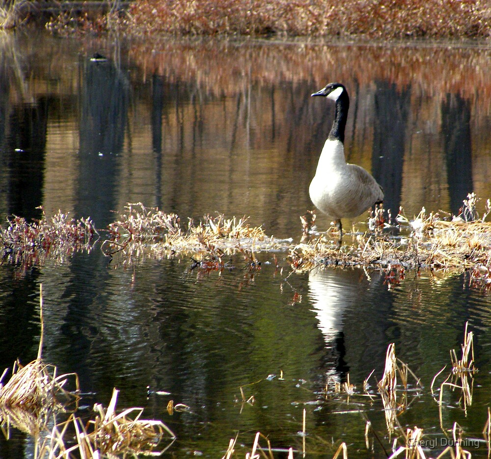 reflected goose by Cheryl Dunning
